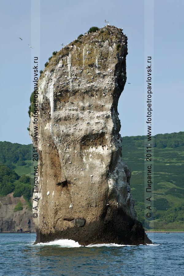 Фотография: средняя скала из группы скал Три Брата. Бухта Шлюпочная, Авачинская губа (бухта), полуостров Камчатка