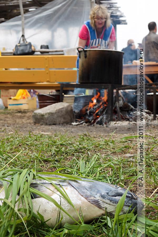 Фотография: чавыча и котел с камчатской ухой. День первой рыбы на Камчатке