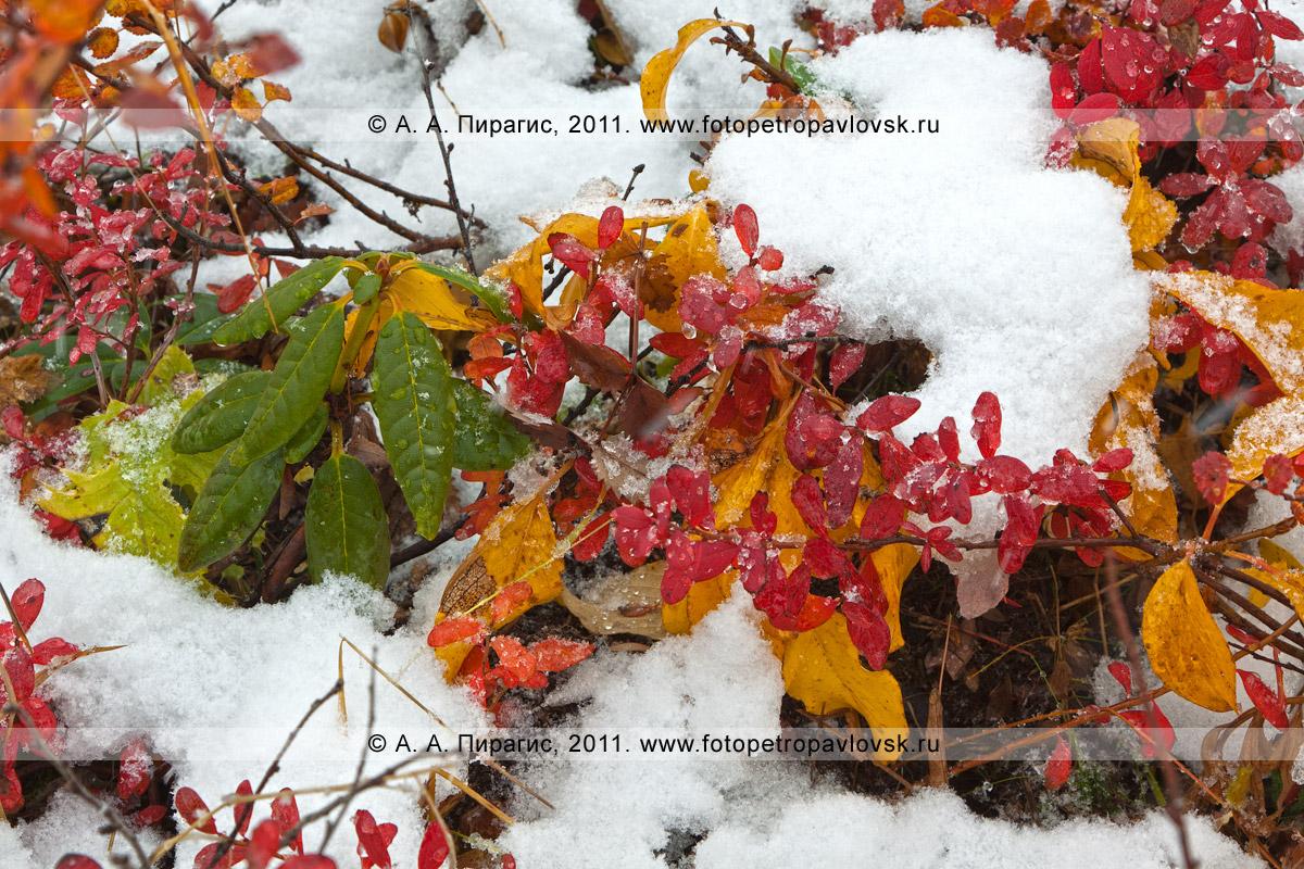 Фотография: краски осени. Горный массив Вачкажец, полуостров Камчатка