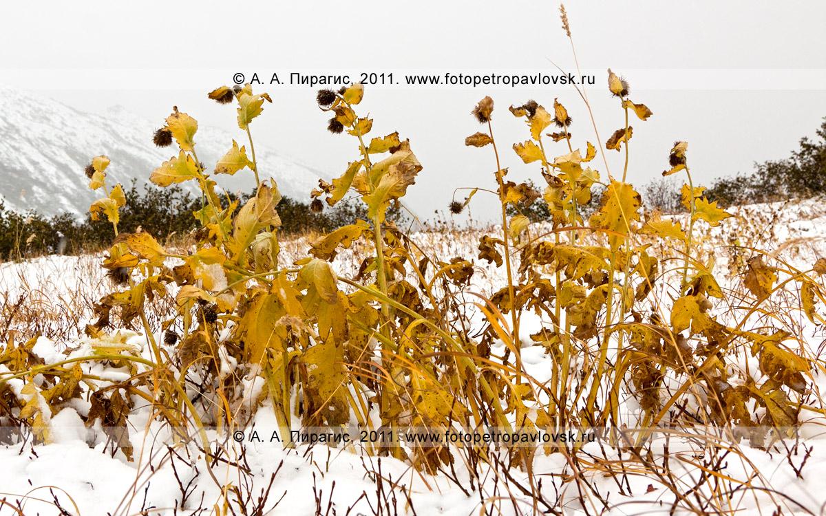 Фотография: на Вачкажец зима пришла в сентябре. Полуостров Камчатка, Южно-Быстринский хребет, горный массив Вачкажец