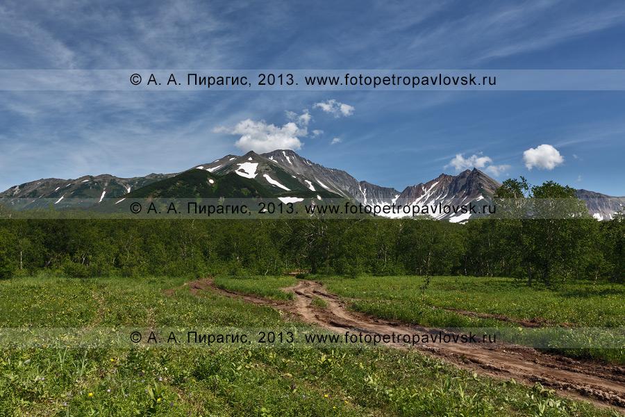 Фотография: летний камчатский пейзаж — лесная дорога к горному массиву Вачкажец на Камчатке