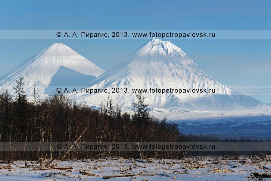 Фотография: вид на вулкан Ключевская сопка и вулкан Камень. Полуостров Камчатка, Ключевская группа вулканов