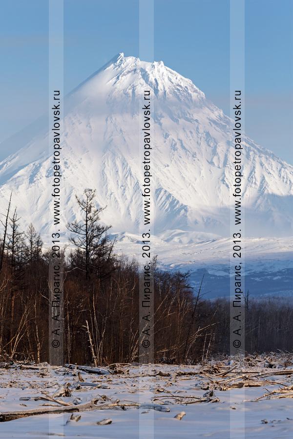 Фотография: вулканы Камчатки — вид на вулкан Камень. Полуостров Камчатка, Ключевская группа вулканов
