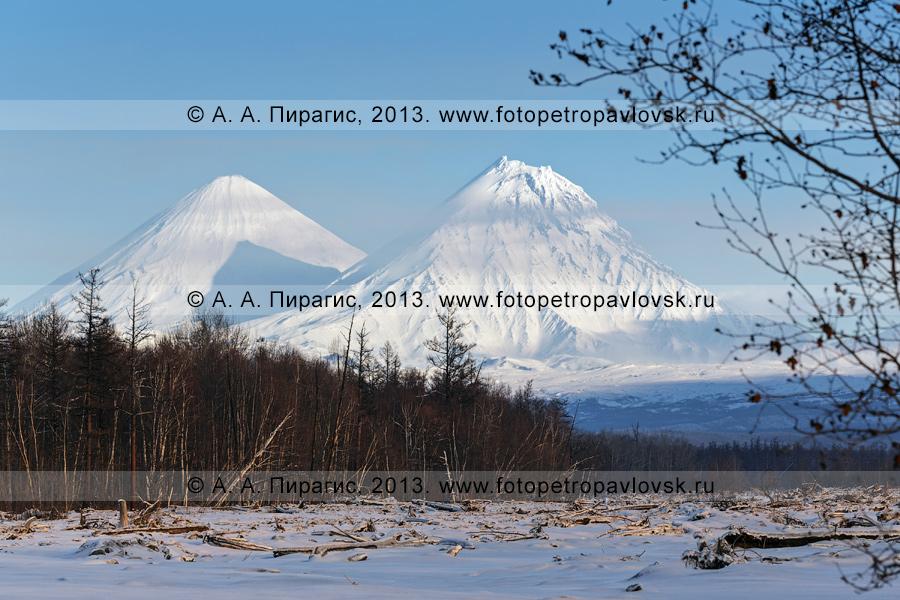 Фотография: камчатский пейзаж — вид на вулкан Ключевская сопка и вулкан Камень. Полуостров Камчатка, Ключевская группа вулканов