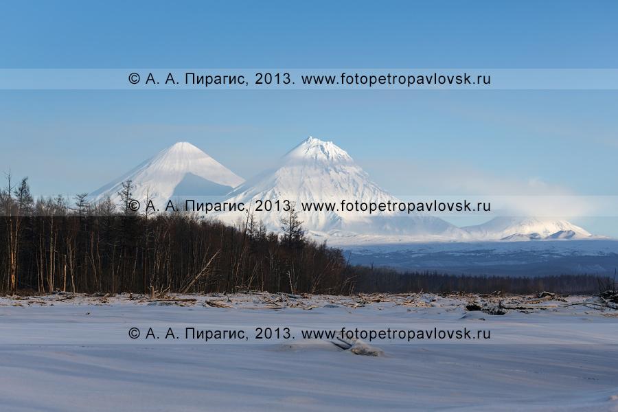 Фотография: вулканы Ключевской группы. Ключевской вулкан (Ключевская сопка) — 4850 метров; вулкан Камень — 4575 метров; вулкан Безымянный (Безымянная сопка) — 2882 метра. Полуостров Камчатка