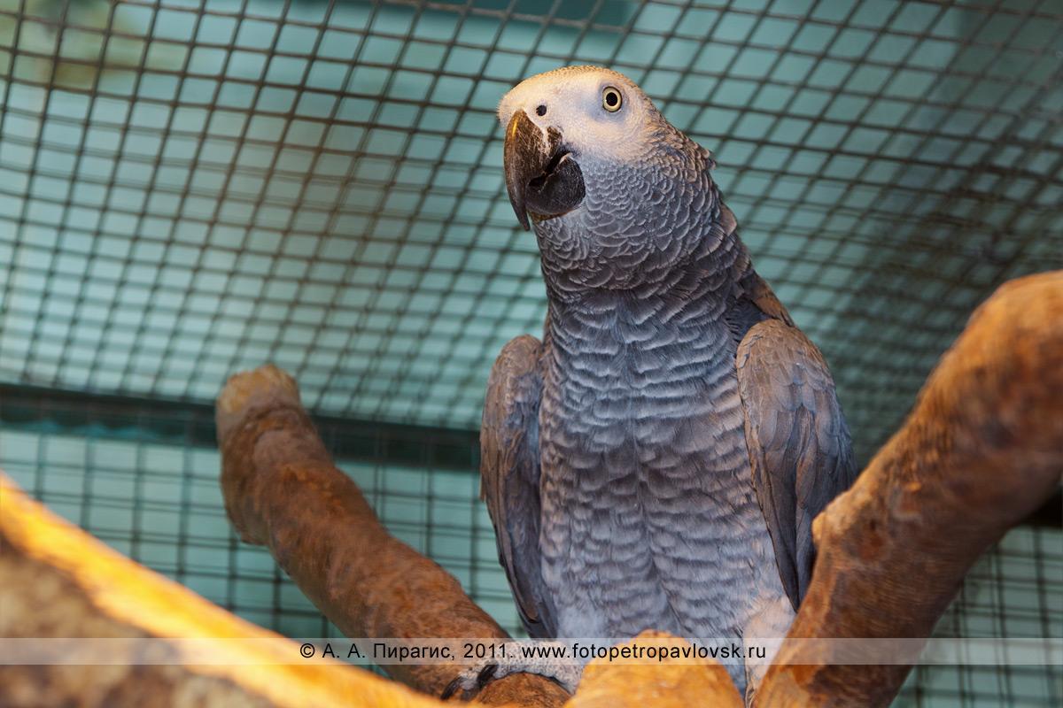 Фотография: попугай. Елизовский зоопарк, город Елизово