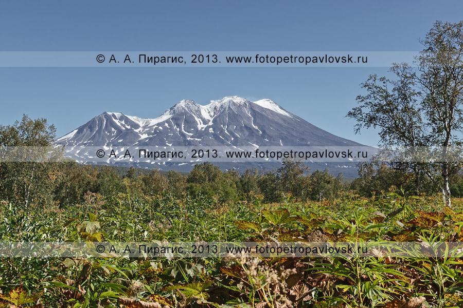 Фотография: Жупановский вулкан (Жупановская сопка), вид с Налычевской долины. Полуостров Камчатка