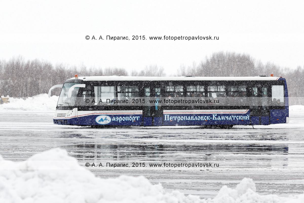 Автобус для перевозки пассажиров в аэропорту везет людей к зданию аэровокзала аэропорта Петропавловск-Камчатский (аэропорт Елизово) во время сильного снегопада. Камчатский край