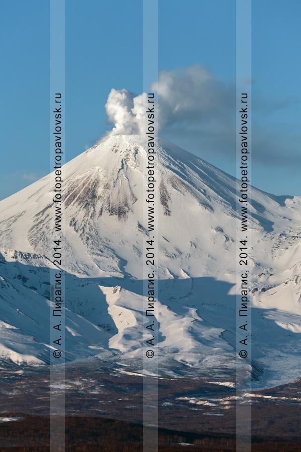 Фотография: вид на действующий Авачинский вулкан из города Петропавловска-Камчатского. На снимке видна фумарольная активность Авачи — выбросы пара и газа из фумарол в кратере вулкана