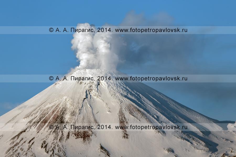 Фотография: конус Авачинского вулкана на Камчатке. На фото видна мощная фумарольная деятельность Авачи — выбросы пара и газа из фумарол в кратере активного вулкана