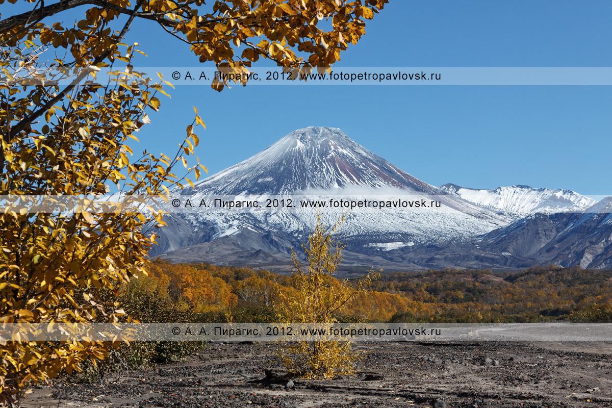 Живописный осенний пейзаж, вид с русла реки Сухая Елизовская на вулкан Авача (Avacha Volcano) на полуострове Камчатка