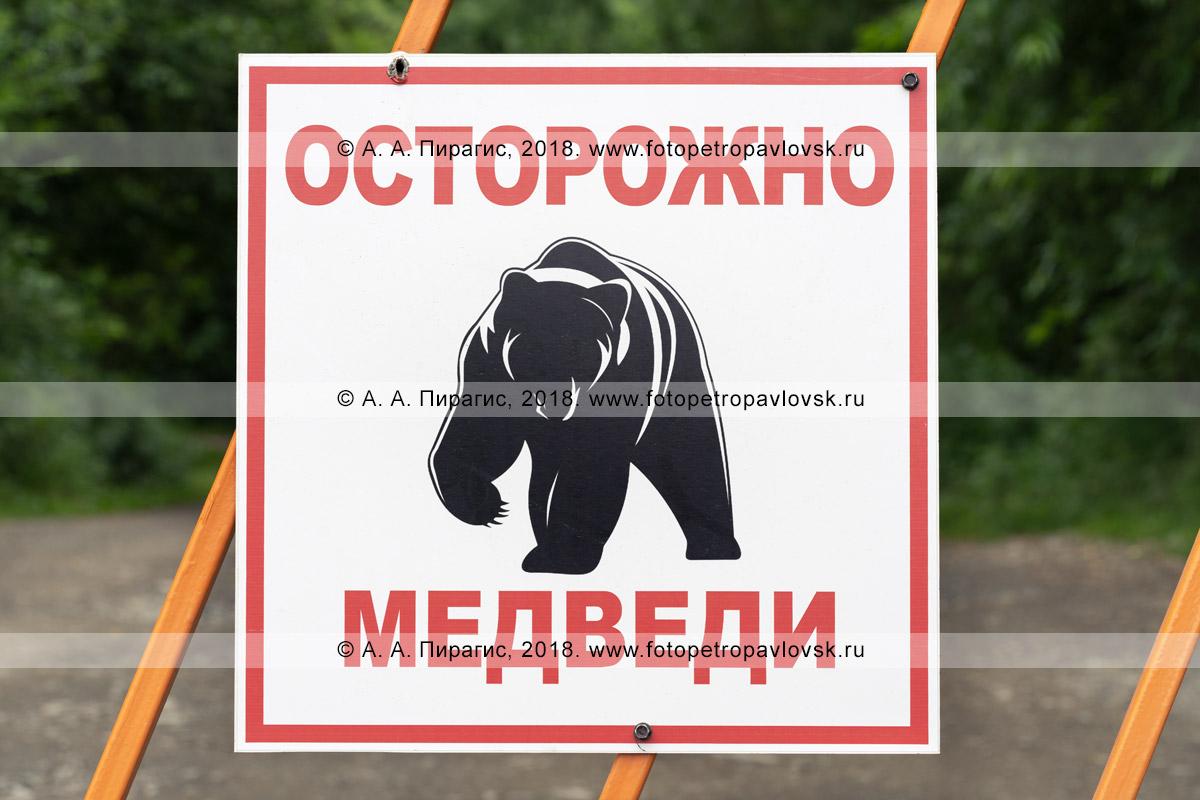 Фотография: предупреждающий знак с надписью: «Осторожно, медведи» и изображением разъяренного камчатского бурого медведя