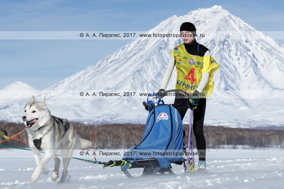 Фотография: камчатский каюр Юлия Чирухина управляет собачьей упряжкой во время соревнований по зимним дисциплинам ездового спорта на полуострове Камчатка