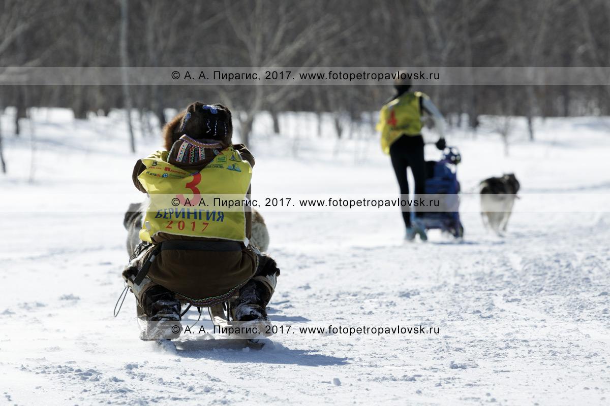 Фотография: каюр Мандятов Роман управляет собачьей упряжкой камчатских ездовых собак во время соревнований по зимним дисциплинам ездового спорта на полуострове Камчатка