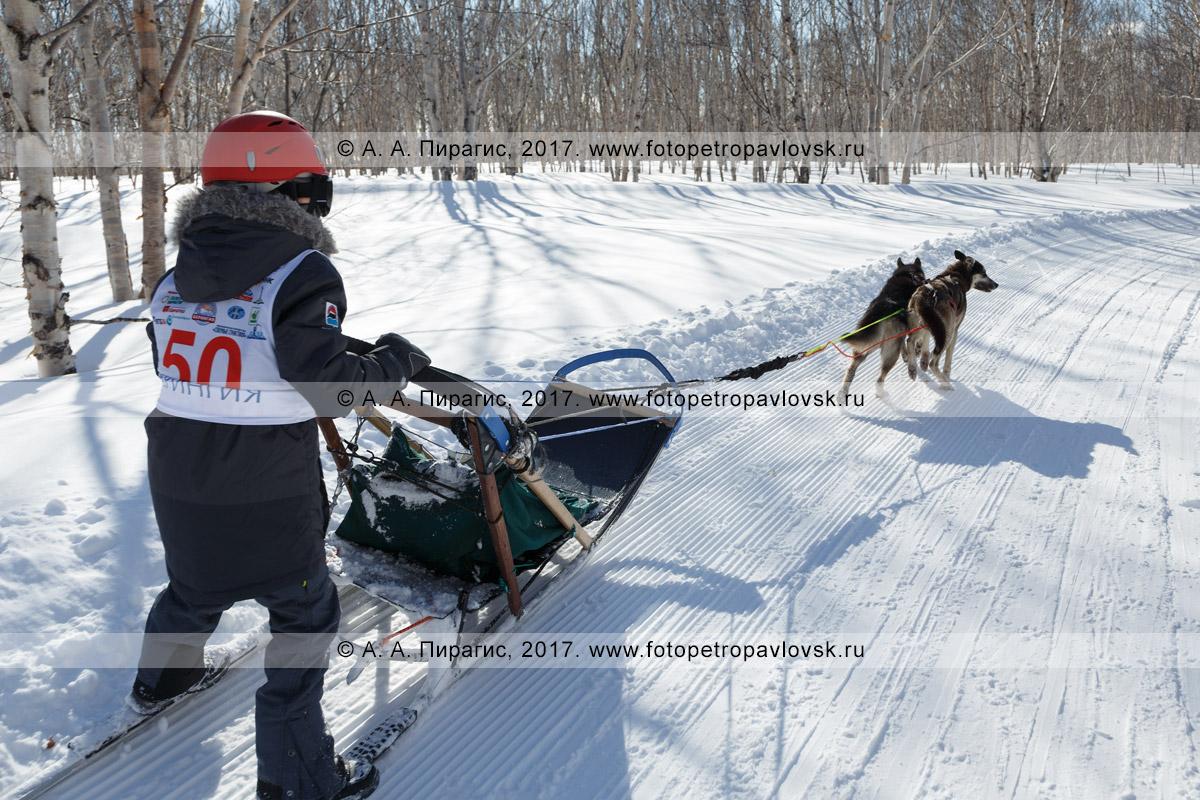 Фотография: камчатский каюр Тимур Хакимов, камчатская детская гонка на собачьих упряжках «Дюлин» («Берингия»)