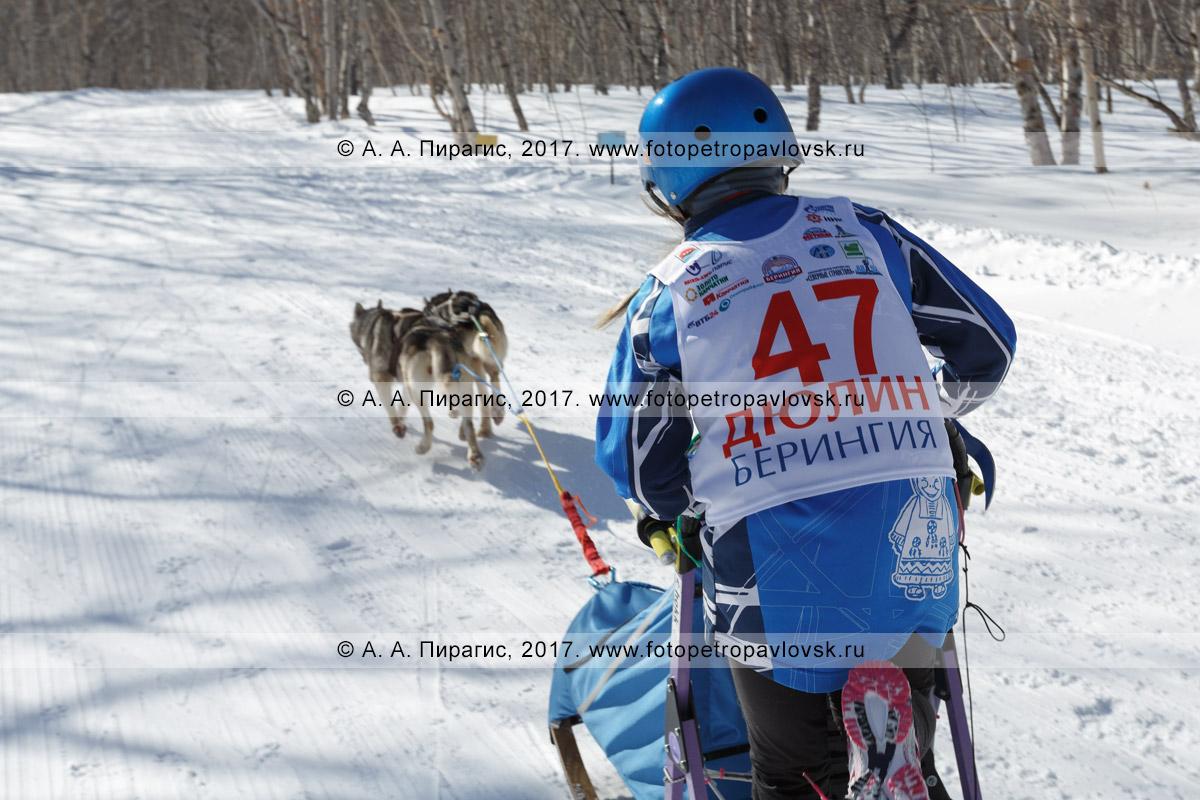 Фотография: камчатский каюр Мария Семашкина, камчатская детская гонка на собачьих упряжках «Дюлин» («Берингия»)
