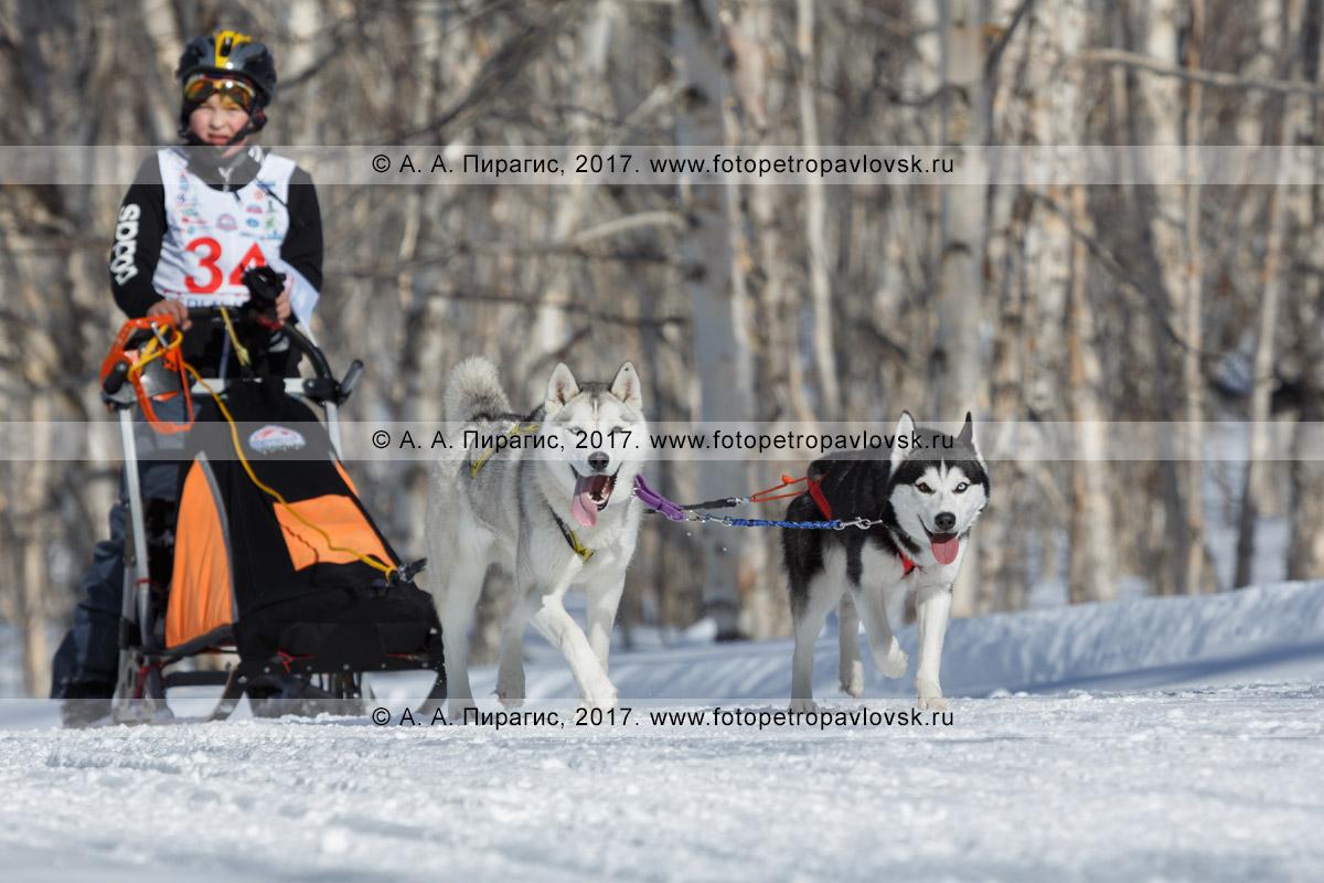 Фотография: камчатский каюр Иван Миронов, камчатская детская гонка на собачьих упряжках «Дюлин» («Берингия»)
