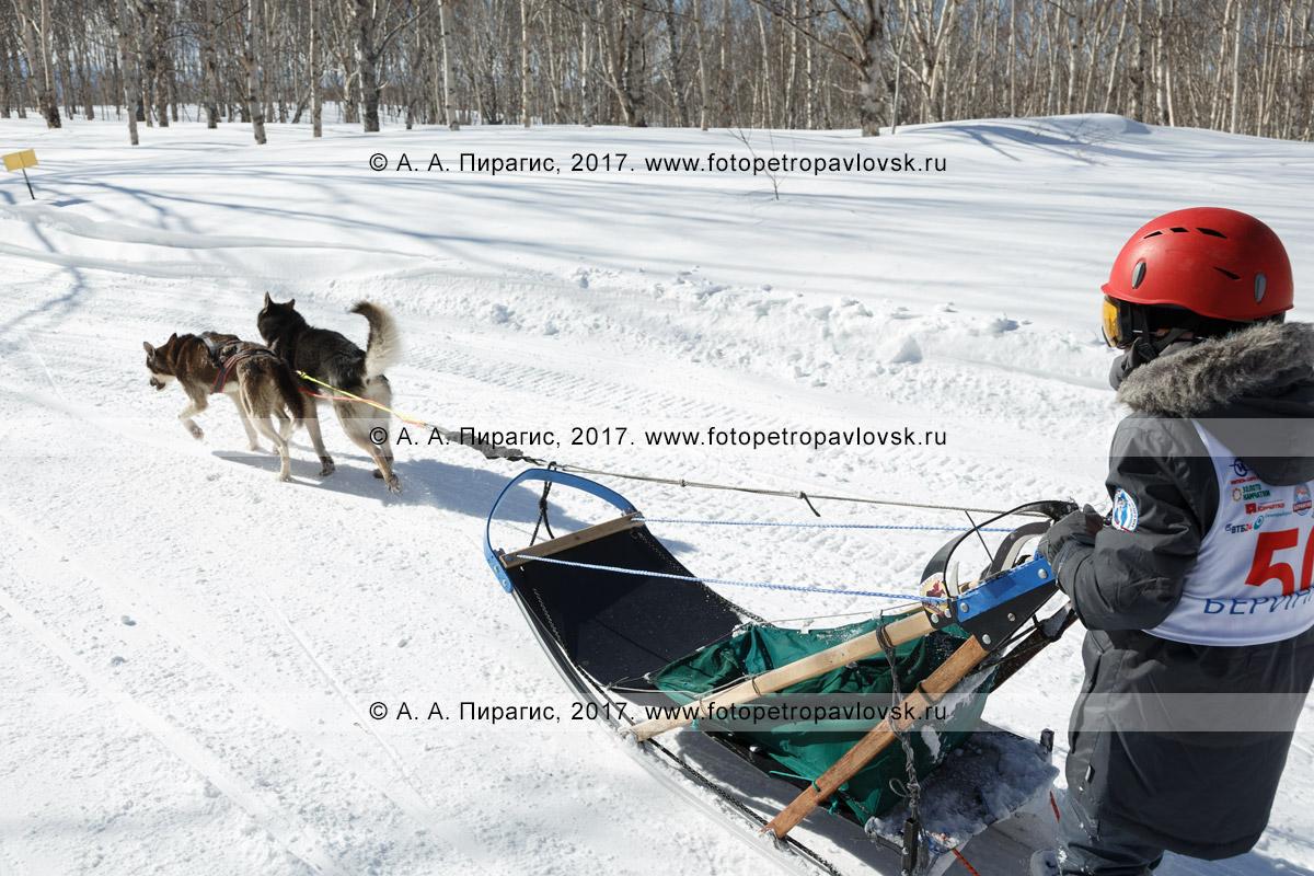 Фотография: каюр Хакимов Тимур, камчатская детская гонка на собачьих упряжках «Дюлин» («Берингия»)