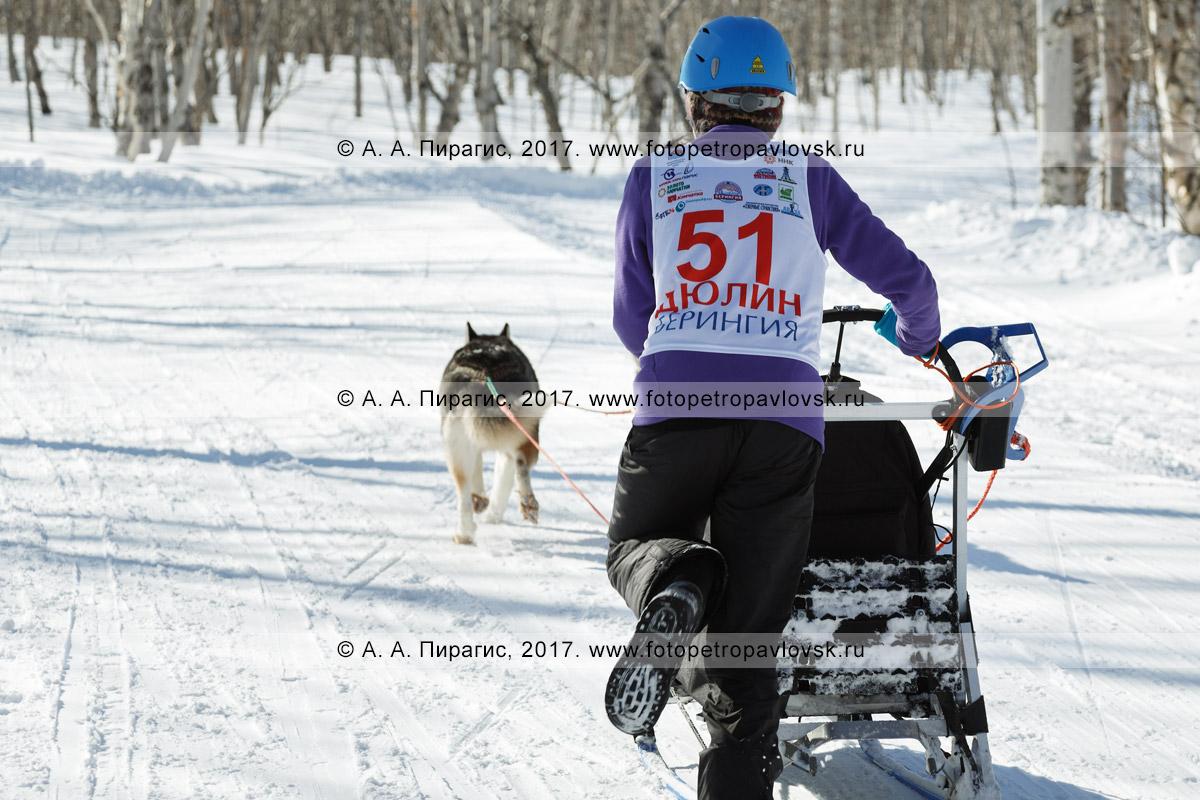 Фотография: камчатский каюр Русских Екатерина, камчатская детская гонка на собачьих упряжках «Дюлин» («Берингия»)