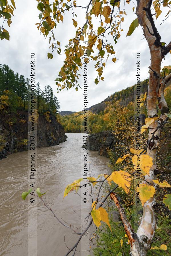 Фотография: камчатский пейзаж — осенний вид на горную реку Быструю (Эссовскую). Камчатский край, Быстринский район