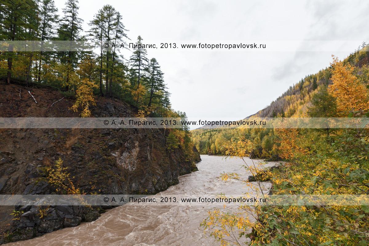Фотография: золотая осень на Камчатке — живописная горная река Быстрая (Эссовская). Быстринский район Камчатского края