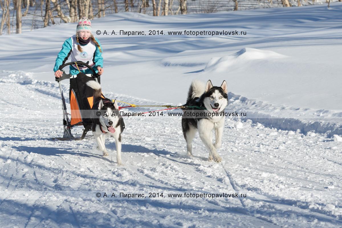 Фотография: камчатская спортсменка — участница гонки на собачьих упряжках. Чемпионат и первенство Петропавловск-Камчатского городского округа по зимним видам ездового спорта