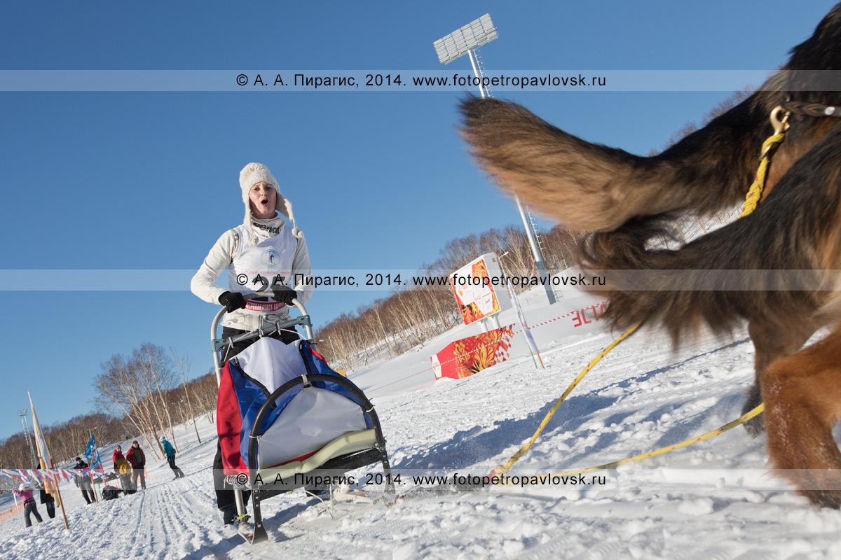 Фотография: камчатская спортсменка — участница гонки на собачьих упряжках. Чемпионат и первенство Петропавловска-Камчатского по зимним видам ездового спорта