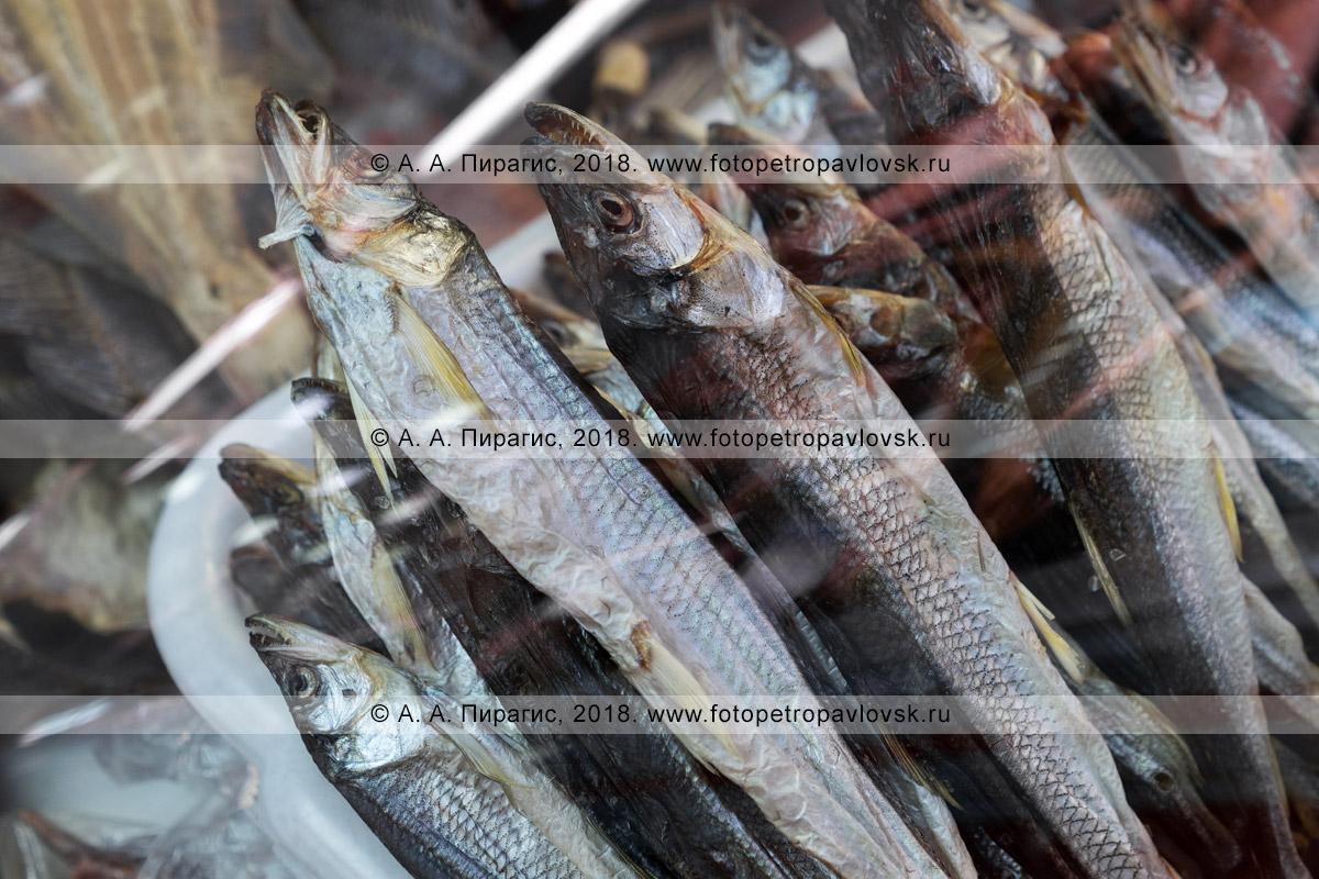 Фотография: камчатский деликатес — вяленая соленая рыба корюшка в витрине торгового прилавка рыбного рынка в Петропавловске-Камчатском