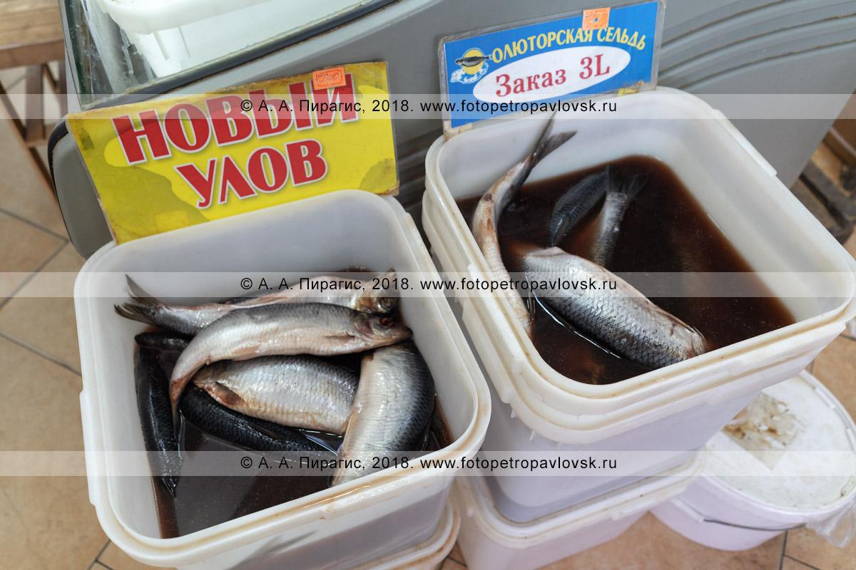 Фотография: камчатский деликатес — соленая рыба селедка олюторская на рыбном рынке, цена сельди