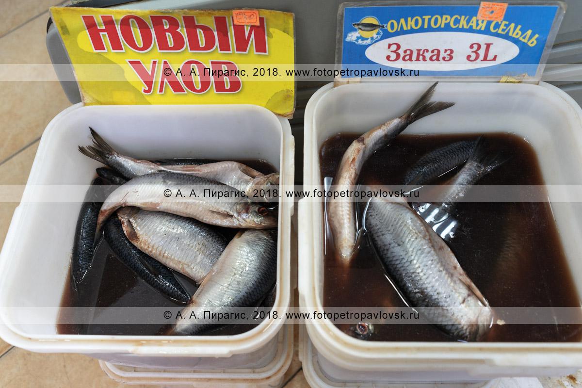 Фотография: соленая рыба олюторская сельдь в тузлуке в куботейнере на рыбном рынке в городе Петропавловске-Камчатском