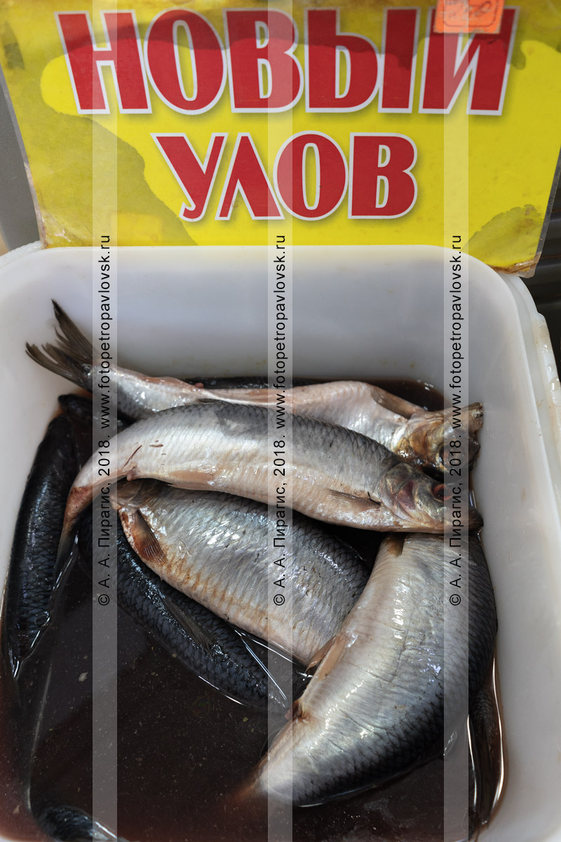 Фотография: соленая рыба сельдь олюторская нового улова в тузлуке в куботейнере на рыбном рынке в столице Камчатского края