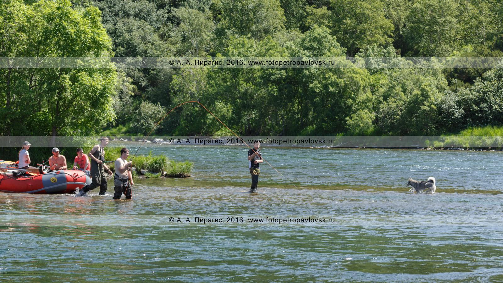 Фотография: туристы ловят нахлыстом рыбу радужная форель (микижа) во время летнего сплава на рафте по камчатской горной реке