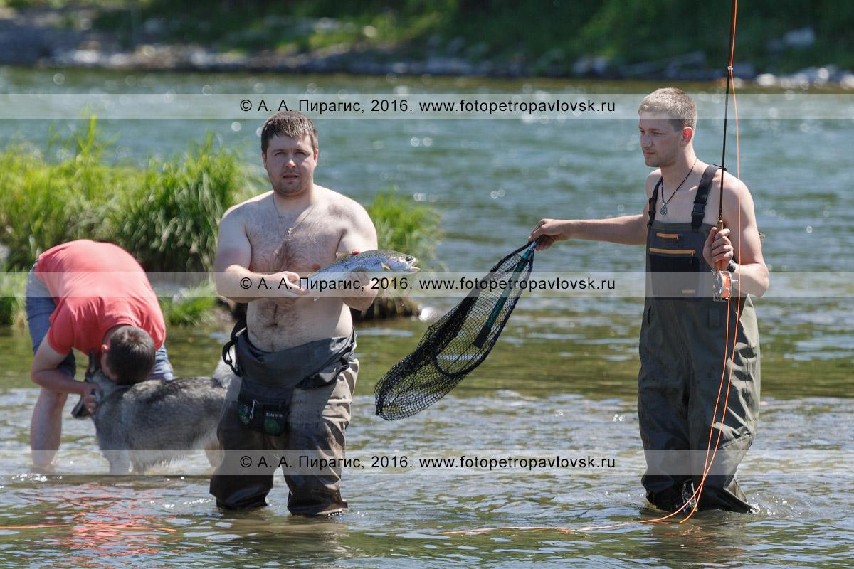 Фотография: умелый рыболов демонстрирует свой улов — радужную форель, или микижу, пойманную нахлыстом в камчатской горной реке во время многодневного путешествия по водоему на рафте