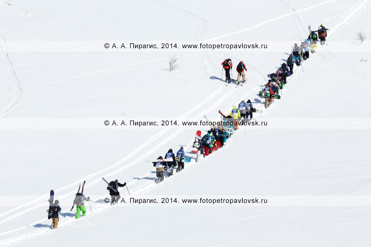 Фотография: большая группа сноубордистов и горнолыжников взбирается на гору для фрирайда. Полуостров Камчатка