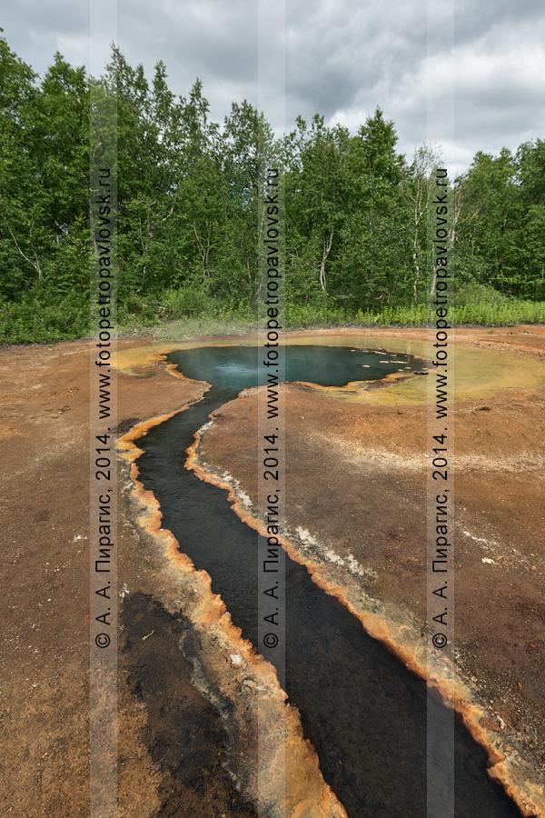 Термальный источник Грифон Иванова и травертиновый ручей, вытекающий из него. Камчатский край, Налычево