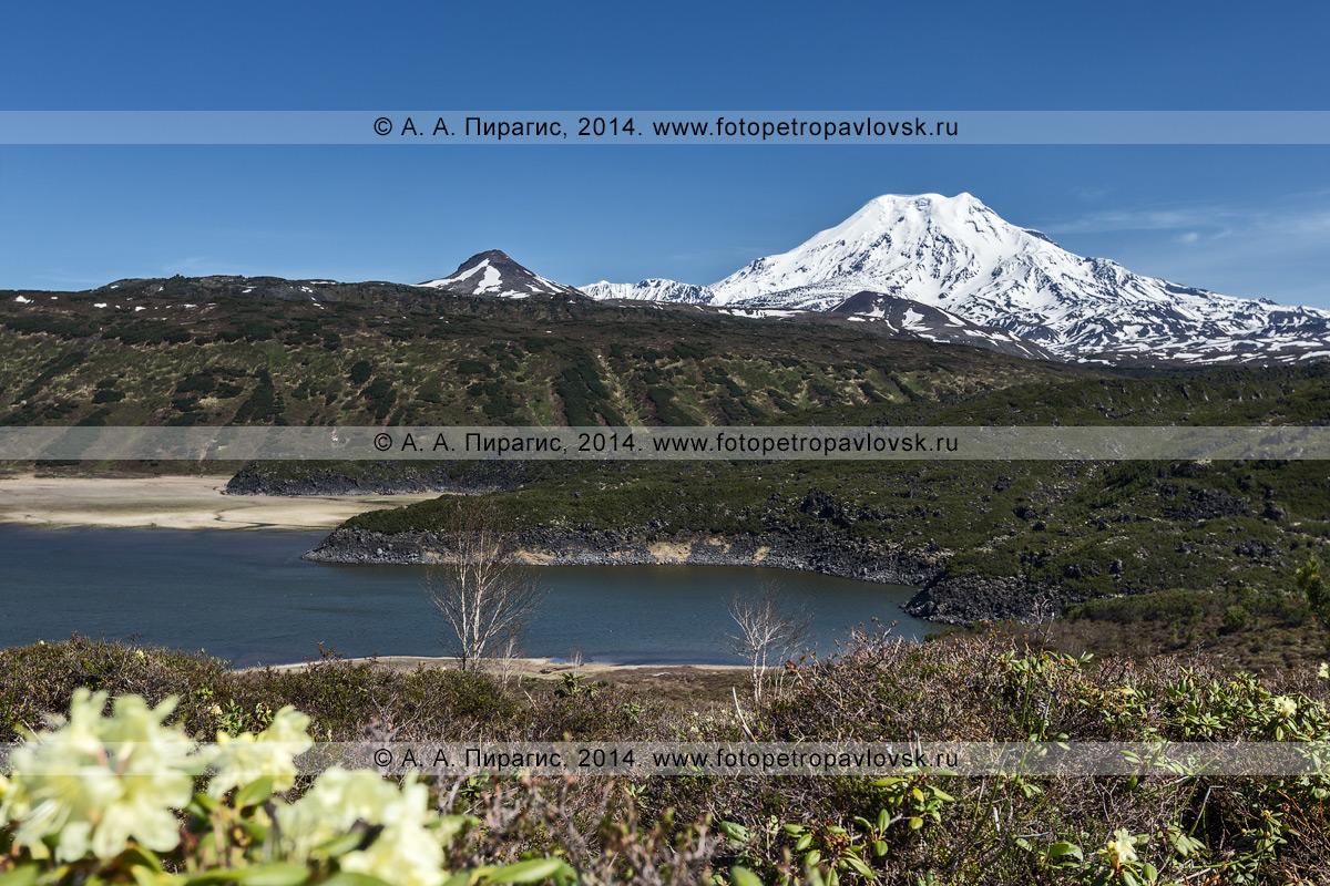 Фотография: озеро Арбунат на фоне активного, действующего вулкана Ичинская сопка (Ichinskaya Sopka). Срединный хребет, полуостров Камчатка