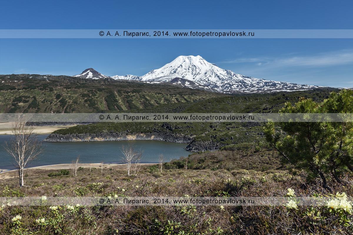 Фотография: действующий вулкан Ичинская сопка и озеро Арбунат, подпруженное лавовым потоком вулкана Северный Черпук. Полуостров Камчатка, Срединный хребет