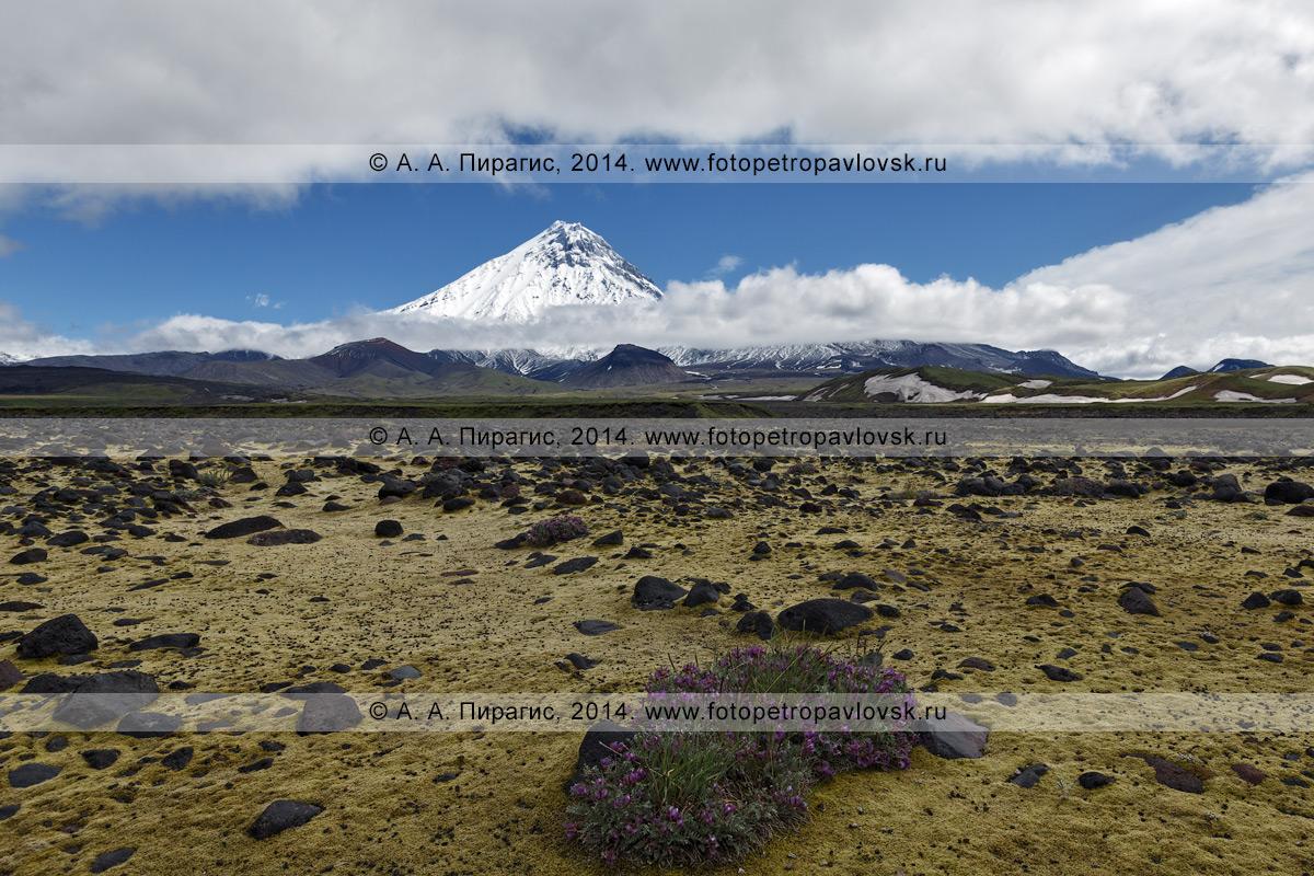 Вид на камчатский вулкан Камень (Kamen Volcano) с русла реки Студеной. Полуостров Камчатка, Центральная Камчатская депрессия, Ключевская группа вулканов
