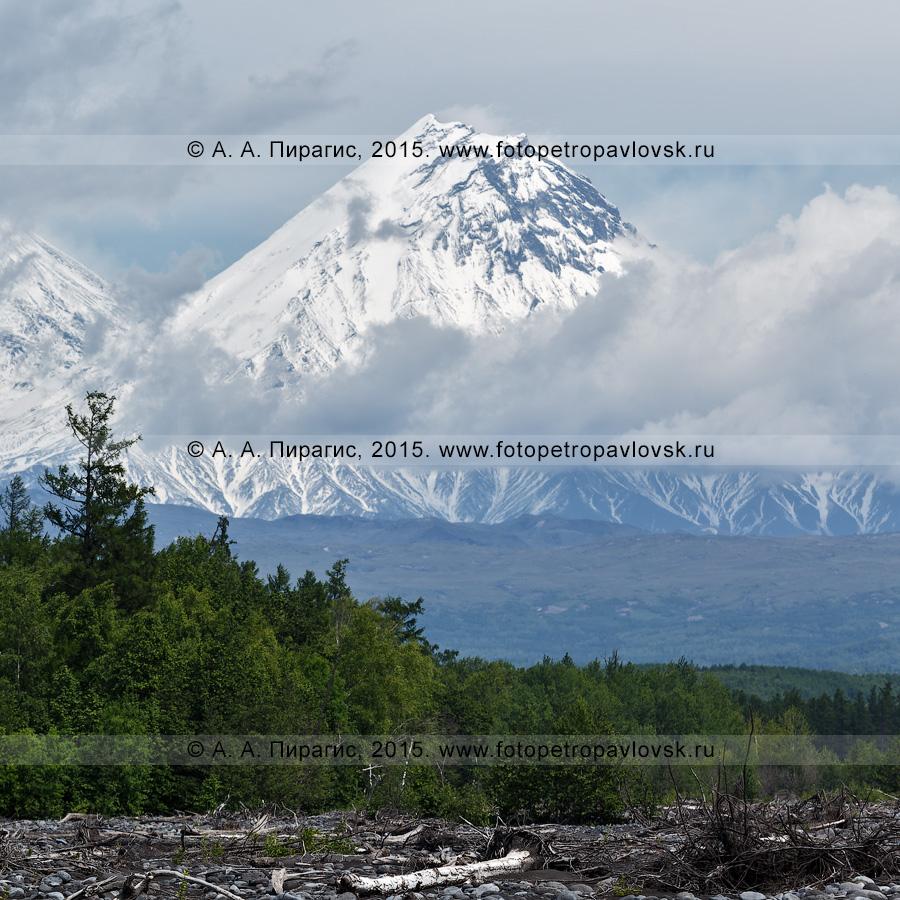 Фотография: летний камчатский пейзаж — вид на стратовулкан Камень (Kamen Volcano). Ключевская группа вулканов на Камчатке