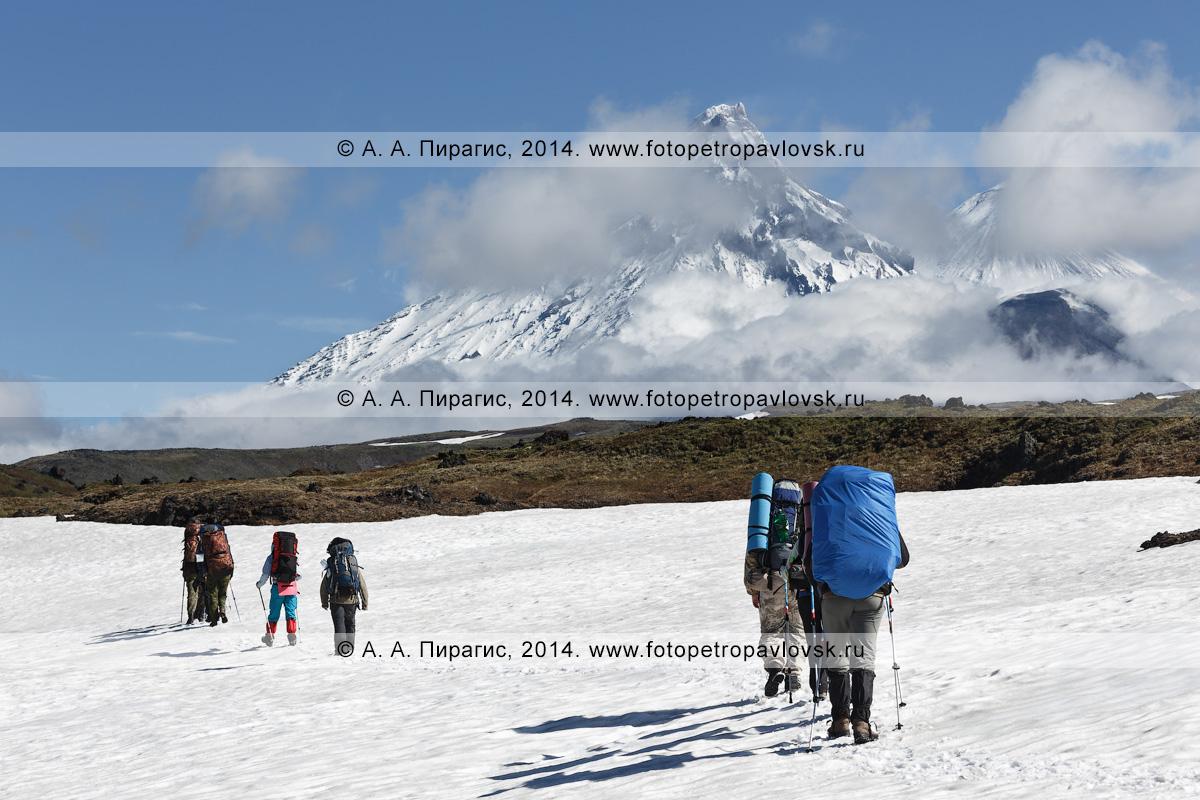 Фотография: пеший туризм на Камчатке, группа туристов идет по снежнику в горах на фоне Ключевской группы вулканов (Камень, Ключевской, Безымянный)