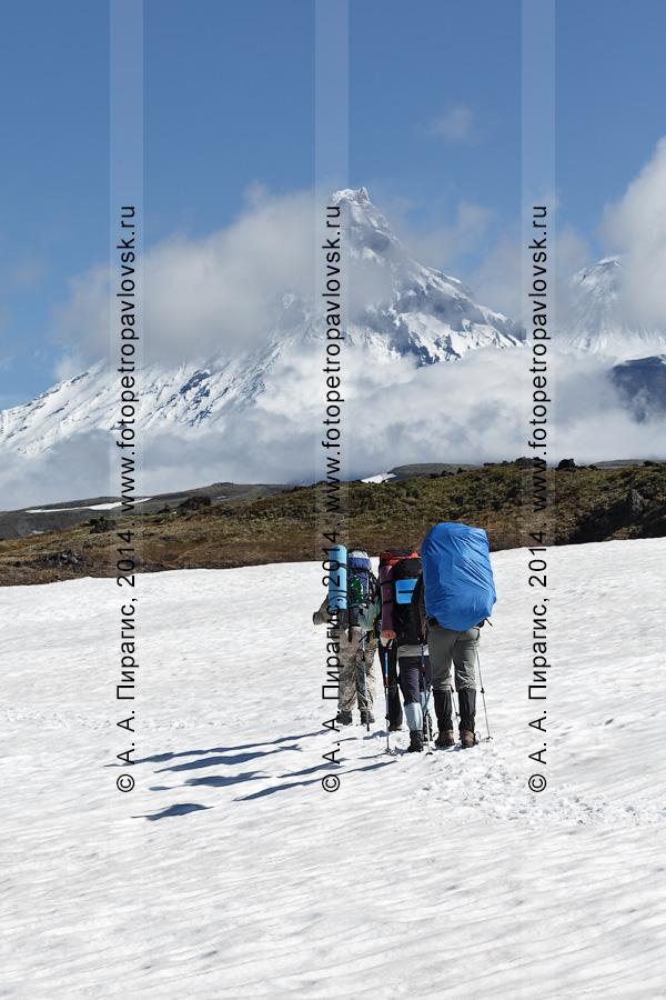 Фотография: пеший туризм на Камчатке, туристы идут по снежнику в горах на фоне вулкана Камень, вулкана Ключевского и вулкана Безымянного Ключевской группы вулканов
