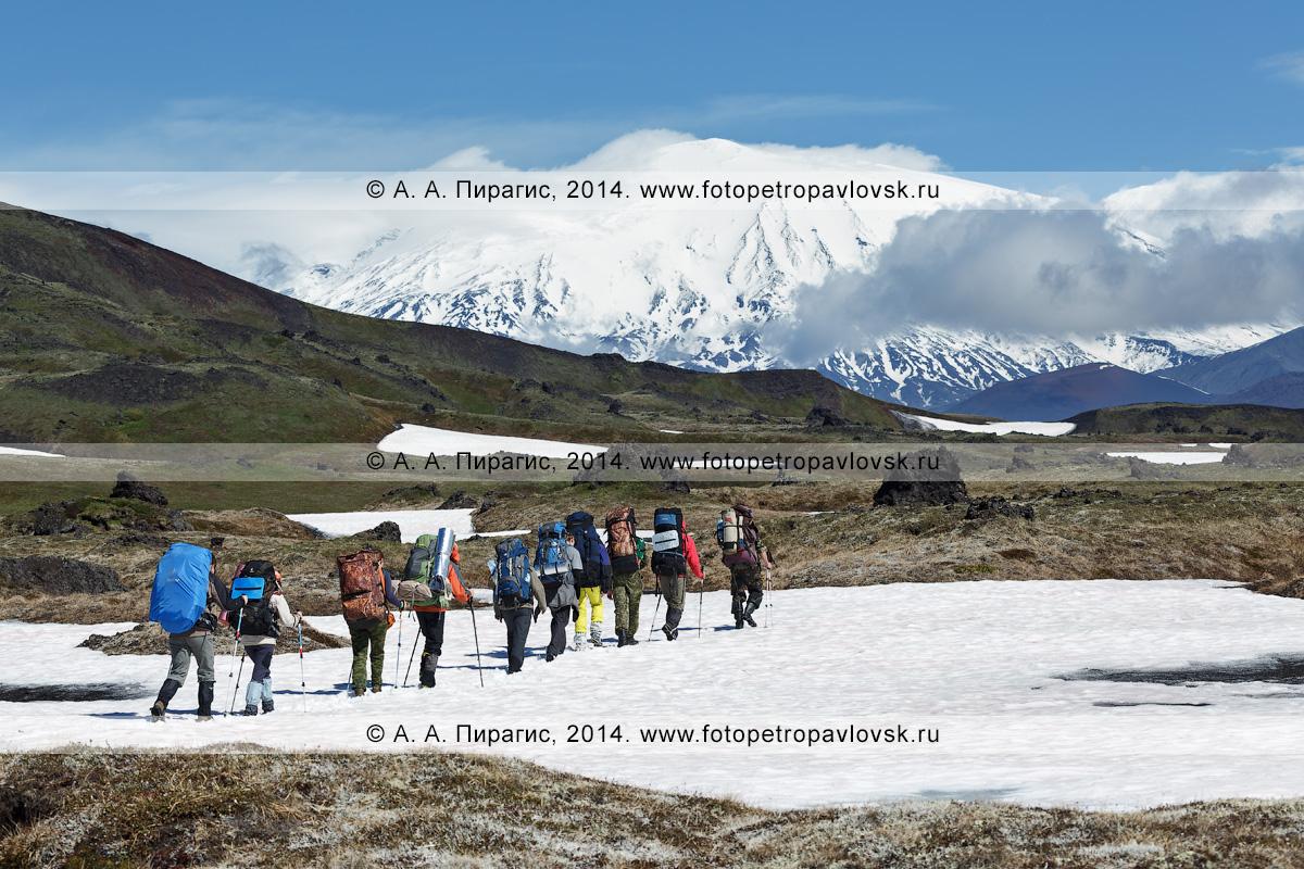 Фотография: камчатский пеший туризм, группа путешественников и туристов идет в горах на фоне Ушковского вулкана Ключевской группы. Полуостров Камчатка