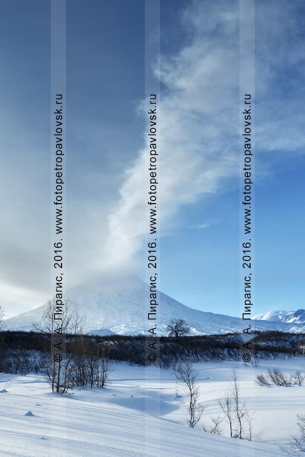 Фотография: живописный зимний камчатский пейзаж — вид на действующий Ключевской вулкан. Камчатский край, Центральная Камчатская депрессия, Ключевская группа вулканов