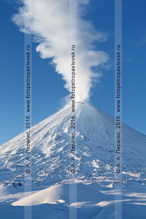Фотография: живописный зимний вид на активный камчатский исполин — вулкан Ключевская сопка (Klyuchevskaya Sopka)