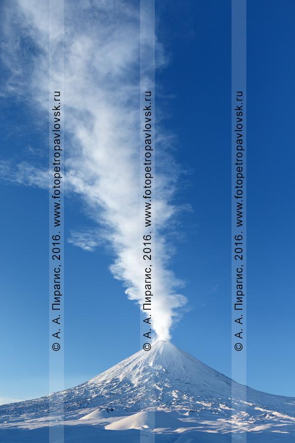 Фотография: Ключевской вулкан на Камчатке, гигантский столб пара и газа, вырывающийся из кратера исполина