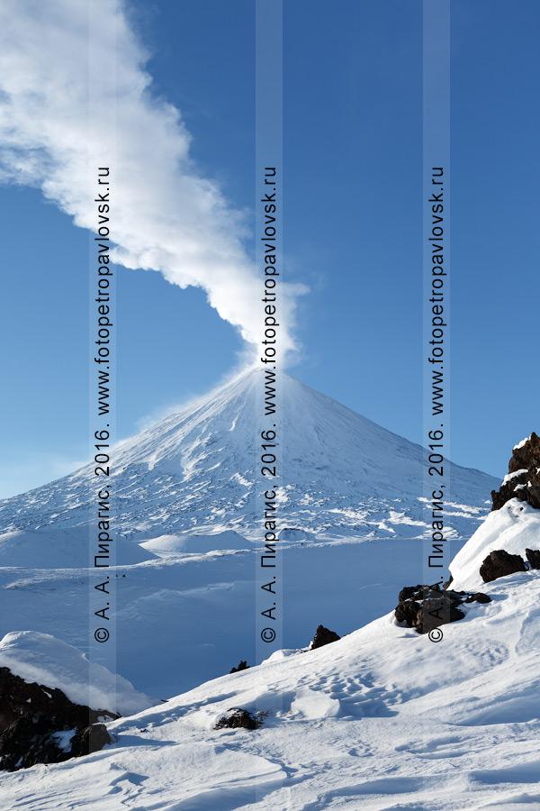 Фотография: активный вулкан Ключевская сопка, зимний вид на самый высокий действующий вулкан Евразии. Камчатский край