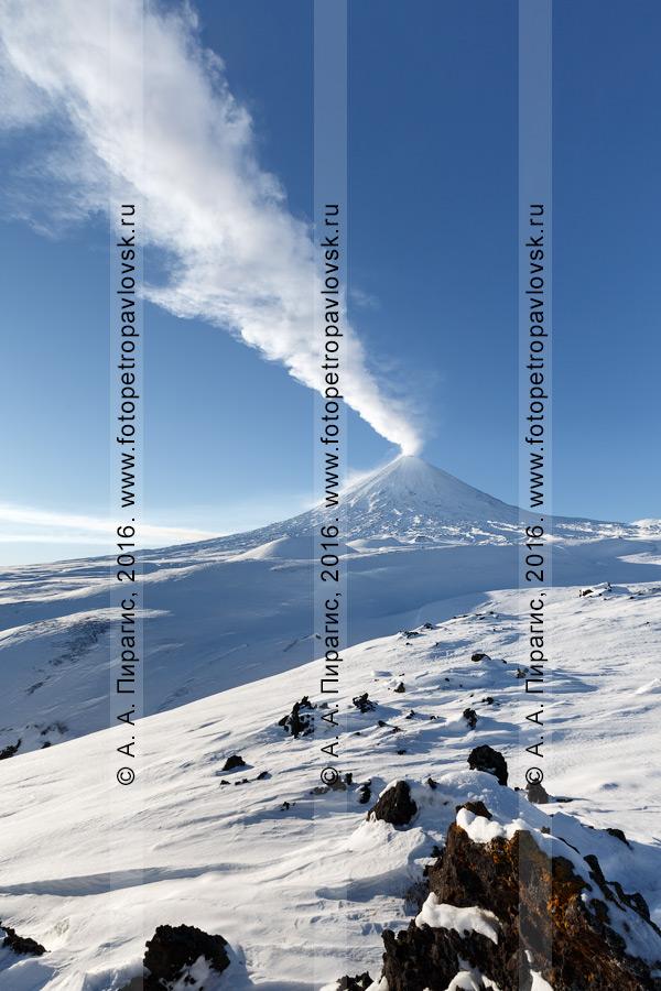 Фотография: зимний вид на вулкан Ключевская сопка (Klyuchevskaya Sopka) — действующий стратовулкан, самый высокий активный вулкан на Евразийском материке