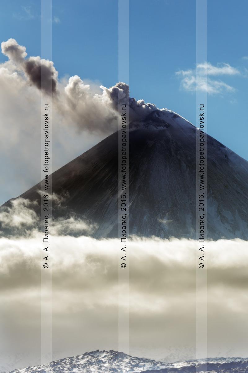 Фотография: вершина конуса извергающегося вулкана Ключевская сопка, выброс пепла, пара и газа из кратера исполина. Камчатский край