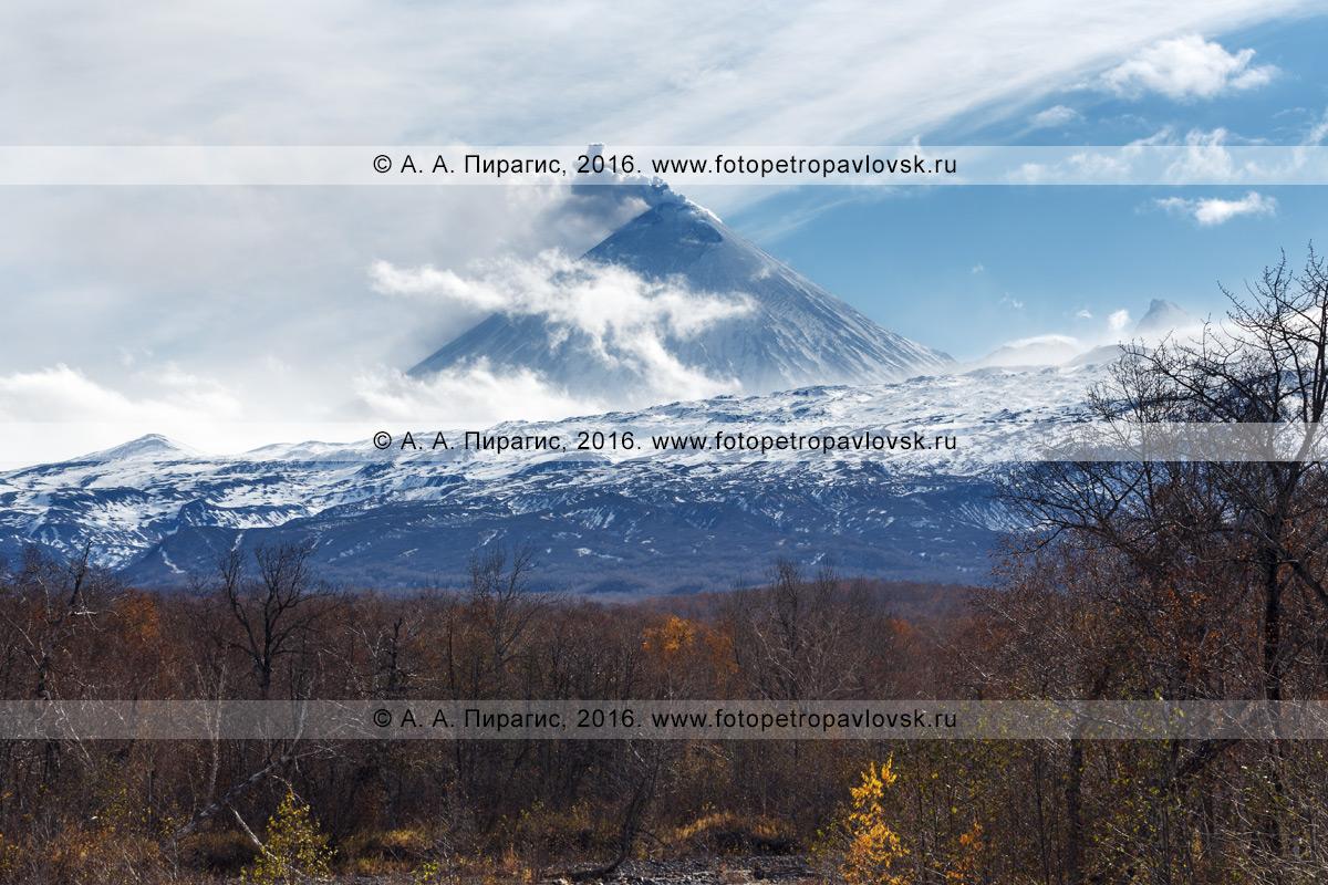 Фотография: живописный вид на извергающийся Ключевской вулкан на полуострове Камчатка