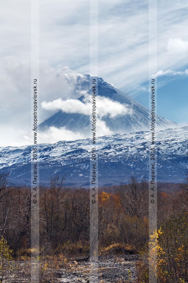 Фотография: красивый вид на извергающийся вулкан Ключевская сопка (Klyuchevskaya Sopka) на Камчатке